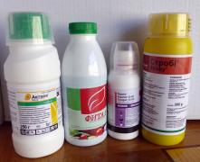 fital systemic fungicide for the garden and vegetable garden