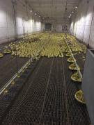 Sell floors for poultry farms, poultry houses